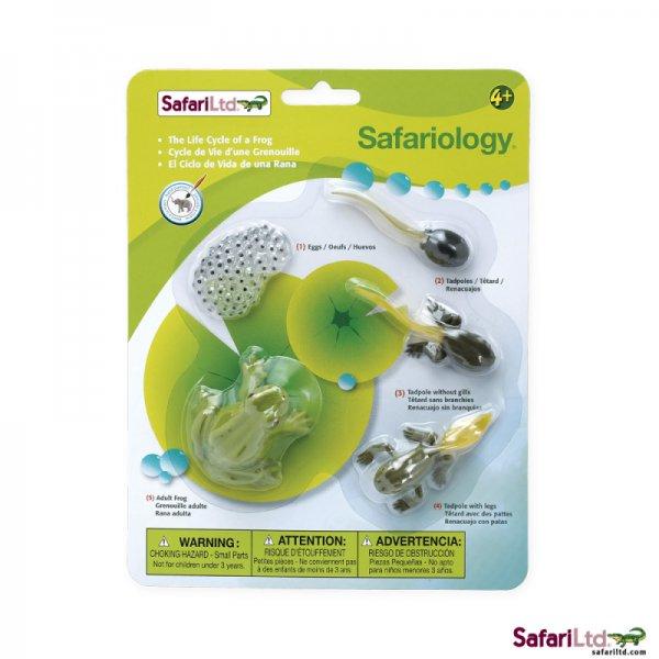 Safari Ltd. Life Cycle of a Frog