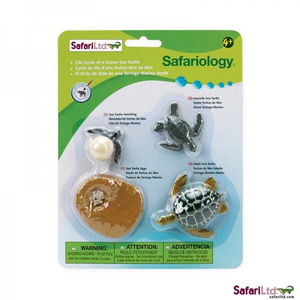 Safari Ltd. Life Cycle of a Green Sea Turtle