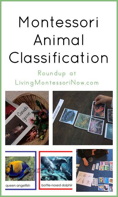 Montessori Monday – Montessori Animal Classification