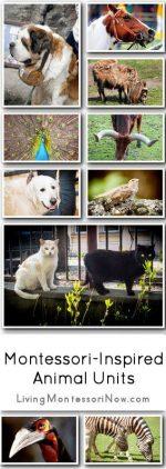 Montessori-Inspired Animal Units