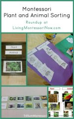 Montessori Monday – Montessori Plant and Animal Sorting