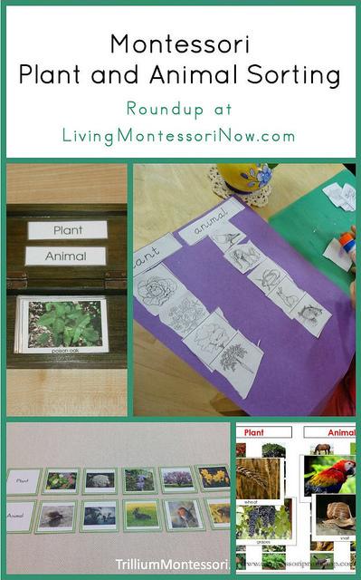 Montessori Plant and Animal Sorting