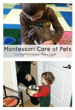 Montessori Care of Pets
