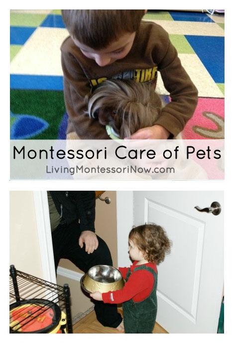 Montessori Care of Pets