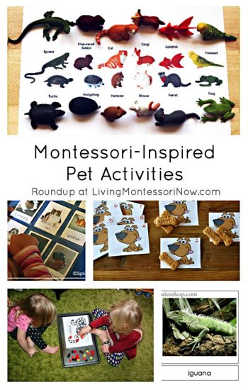 Montessori-Inspired Pet Activities