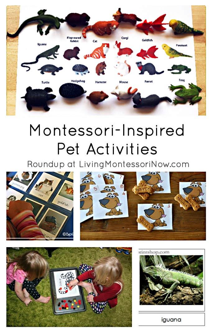 Montessori-Inspired Pet Activities
