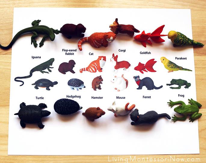 Pet Matching Layout Using Safari Ltd. TOOB Key