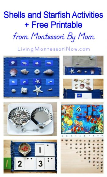Shells and Starfish Activities + Free Printable from Montessori By Mom