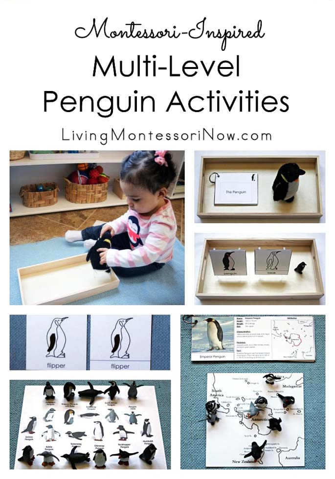 Montessori-Inspired Multi-Level Penguin Activities