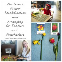 Montessori Flower Identification and Arranging for Toddlers and Preschoolers_square