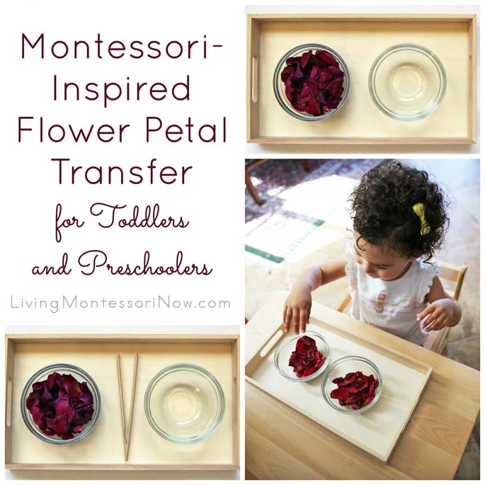 Montessori-Inspired After Mother's Day Flower Petal Transfer for Toddlers and Preschoolers