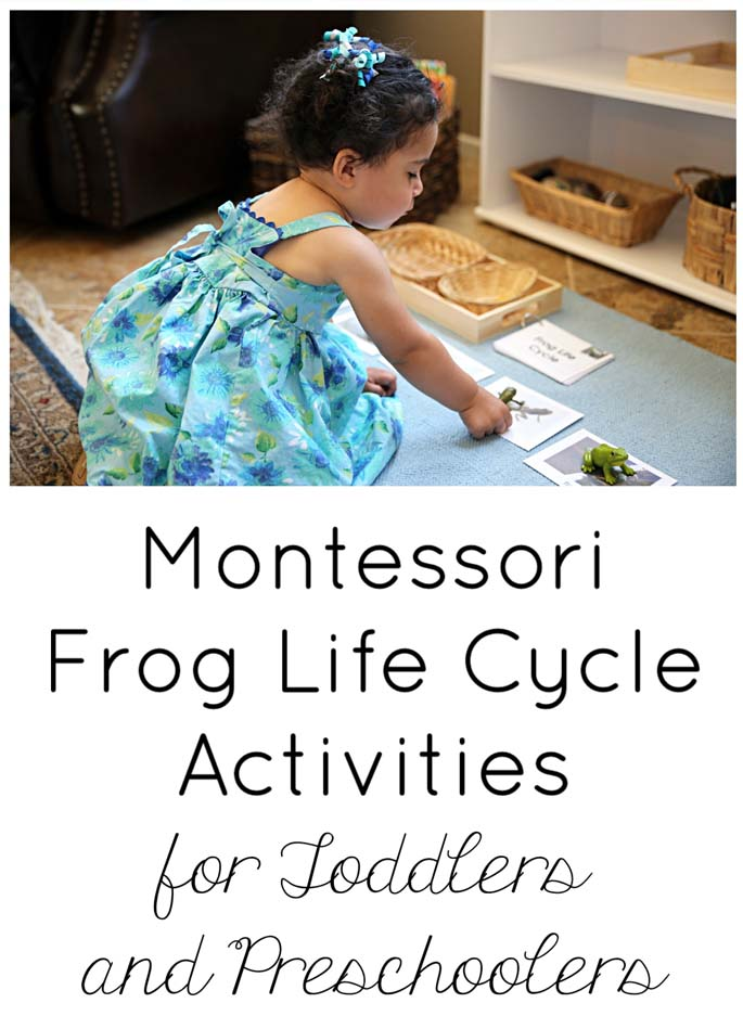 Montessori Frog Life Cycle Activities for Toddlers and Preschoolers