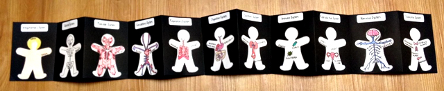 Human Body - 11 Organ Systems Foldable Printable by Megan Escobar
