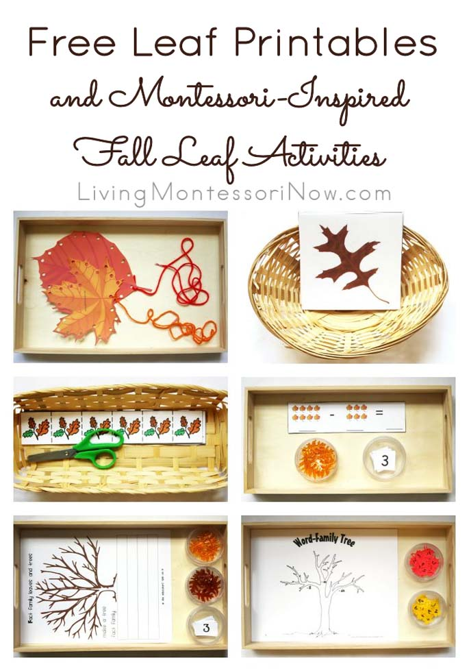 Free Leaf Printables and Montessori-Inspired Leaf Activities