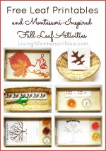 Free Leaf Printables and Montessori-Inspired Fall Leaf Activities