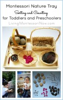 Montessori Nature Tray Sorting and Counting for Toddlers and Preschoolers