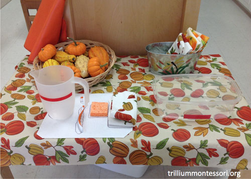 Gourd and Pumpkin Washing (Photo from Trillium Montessori)