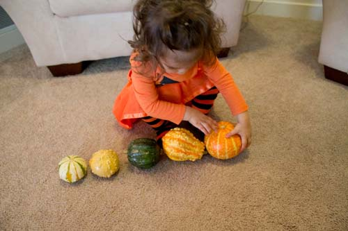 Grading Gourds from Smallest to Largest (Photo from Love Play Learn)