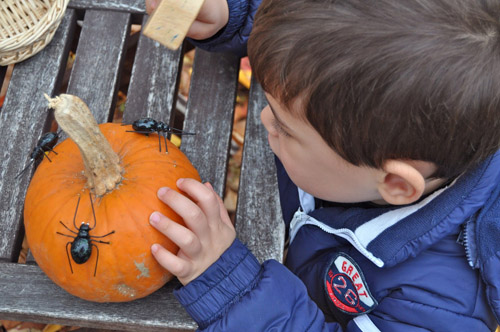 Hammering Spider Nails into a Pumpkin (Photo from Sorting Sprinkles)
