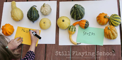 Sorting, Classifying, and Labeling Gourds (Photo from Still Playing School)