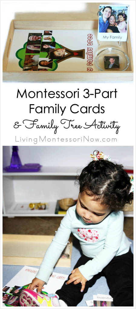 Montessori 3-Part Family Cards and Family Tree Activity