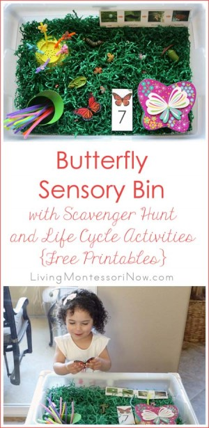 Butterfly Sensory Bin with Scavenger Hunt and Life Cycle Activities {Free Printables}