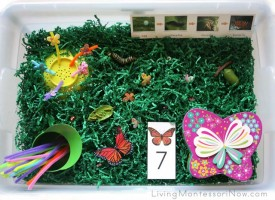 Butterfly Sensory Bin_wt