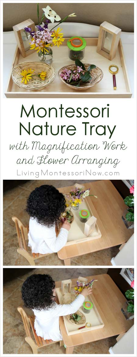 Montessori Nature Tray with Magnification Work and Flower Nature