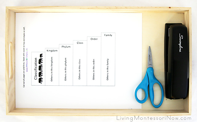 Elephant Classification Bookmaking Tray
