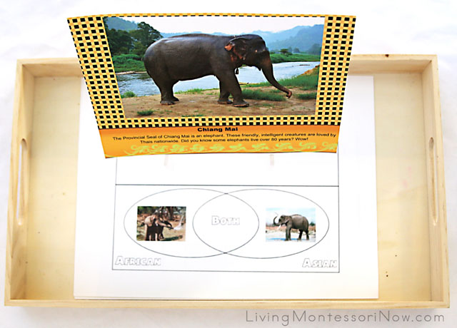Elephant Printables for Ages 5-10