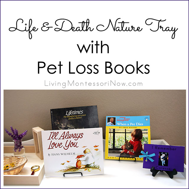 best children s books about the death of a pet living montessori now