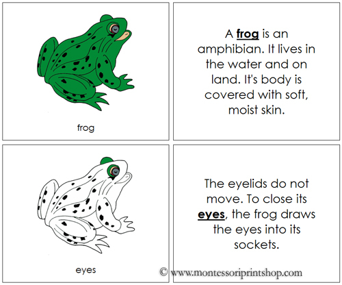 Free Frog Nomenclature Book from Montessori Print Shop