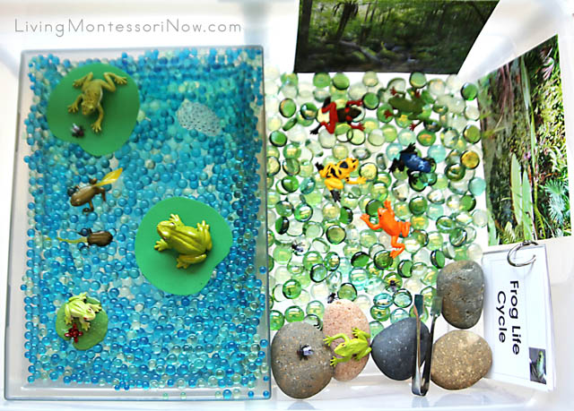 Lots of Learning and Fun with Frogs Sensory Bin