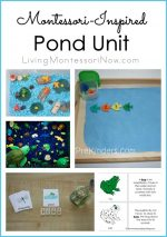 Montessori-Inspired Pond Unit