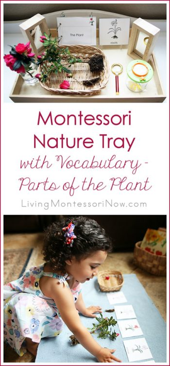 Montessori Nature Tray with Vocabulary - Parts of the Plant_Pinterest