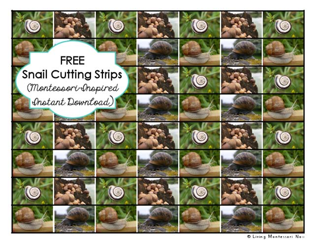 Free Snail Cutting Strips