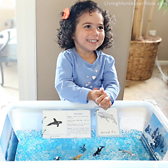 Having Fun with the Whale and Water-Bead Sensory Bin