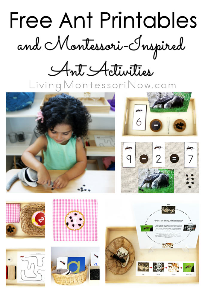 Free Ant Printables and Montessori-Inspired Ant Activities