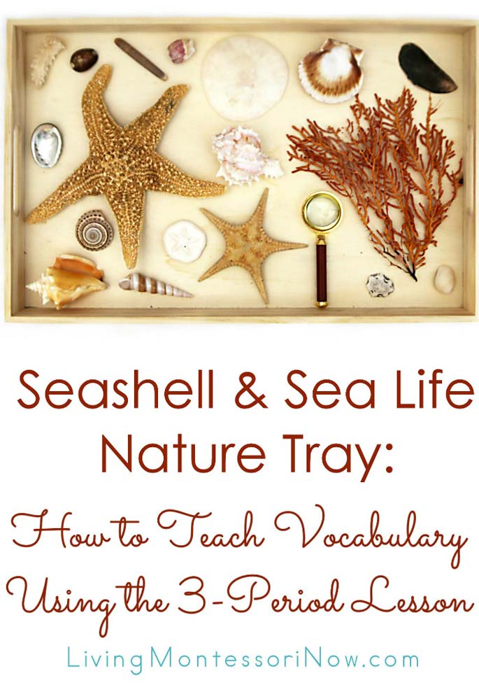 Seashell & Sea Life Nature Tray: How to Teach Vocabulary Using the 3-Period Lesson {Montessori Monday}
