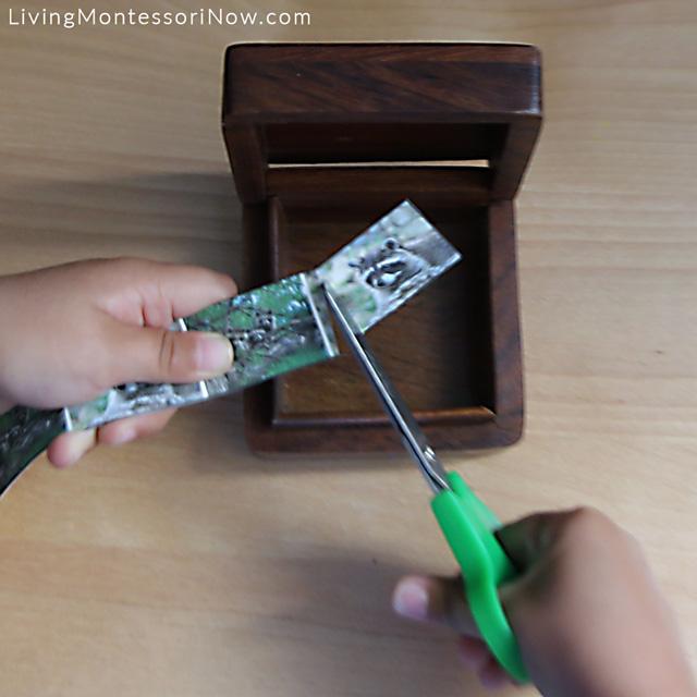 Cutting Raccoon Strips