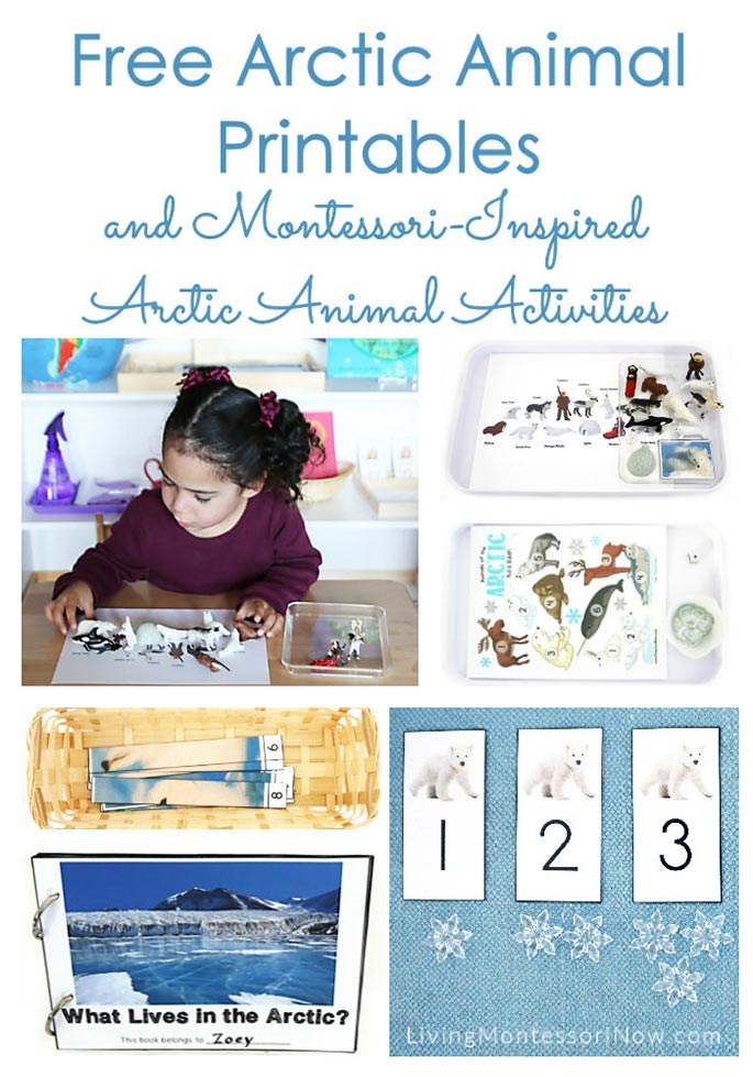 Free Arctic Animal Printables and Montessori-Inspired Arctic Animal Activities