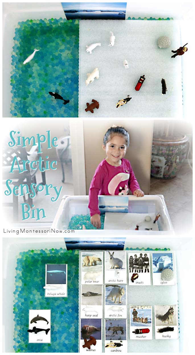 Simple Arctic Sensory Bin with Vocabulary or Grammar Activity