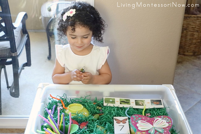Finding the Caterpillar in the Butterfly Sensory Bin