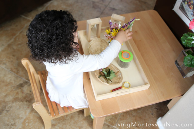 Flower Arranging with a Nature Tray