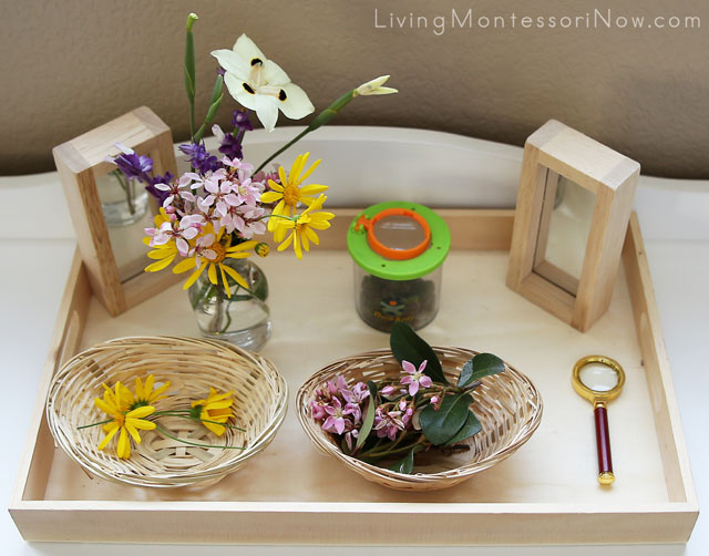 Nature Tray with Magnification Work and Flower Arranging