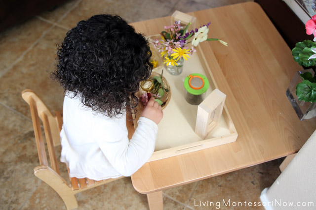 Using a Magnifying Glass with a Nature Tray
