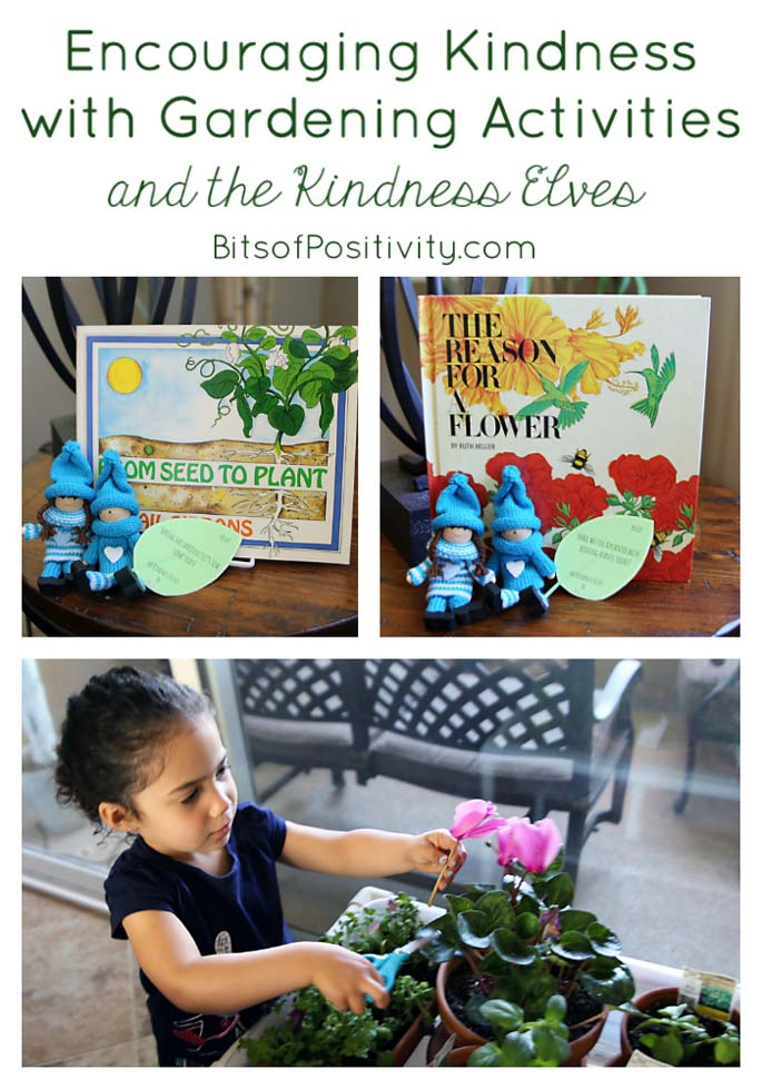 life cycle of a bean plant and seed planting activities