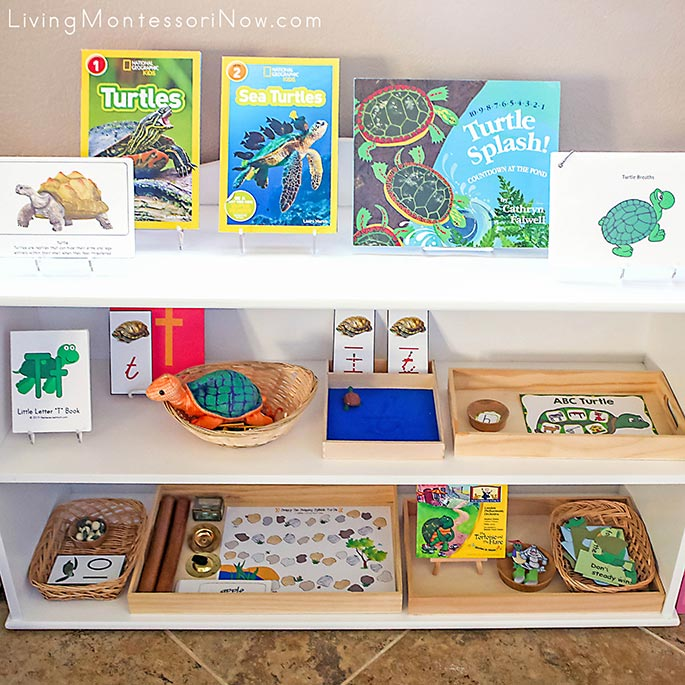 Montessori Shelves with Turtle-Themed Activities