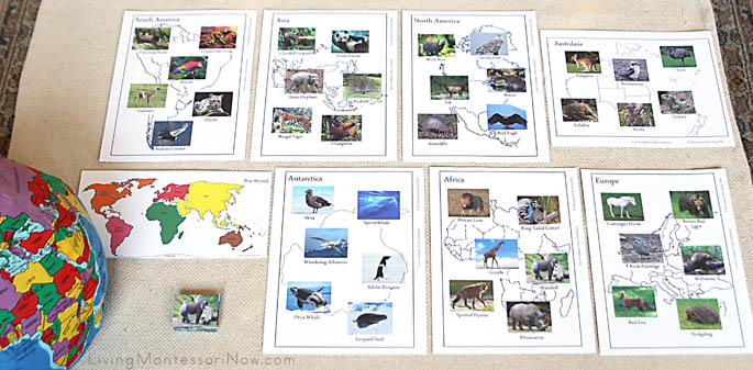 Montessori Animals of the Continents Layout