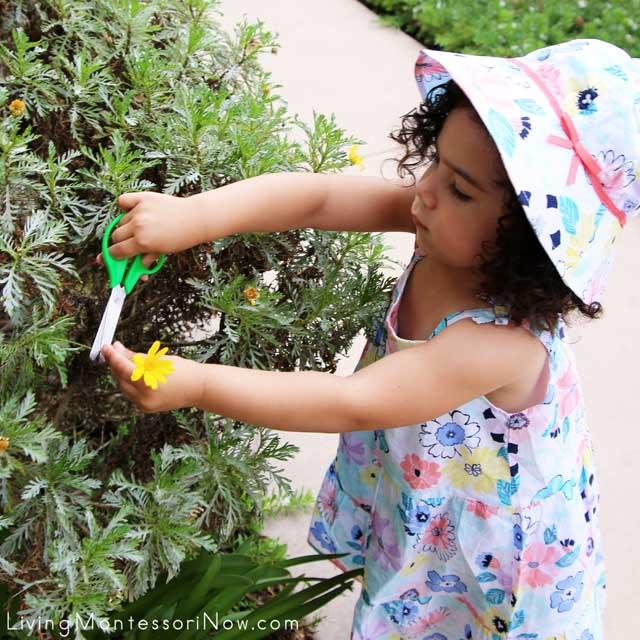 Cutting a Flower Specimen